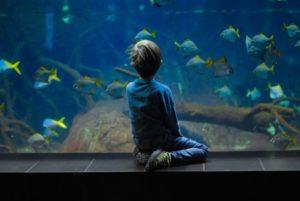 水族館の少年